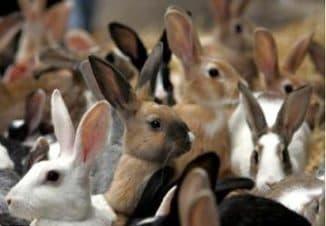 кролиководческая ферма с нуля