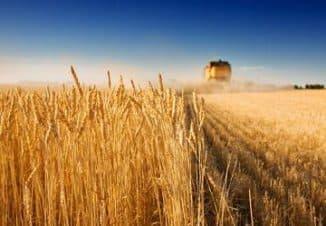 как организовать сельскохозяйственный бизнес