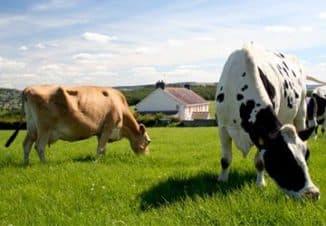 животноводство бизнес