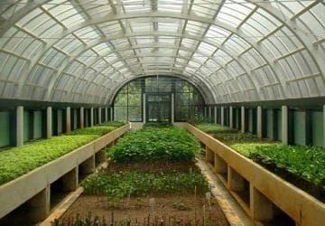 Бизнес план тепличного хозяйства по выращиванию овощей, зелени, комплекс