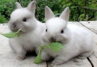 стоимость кроликов