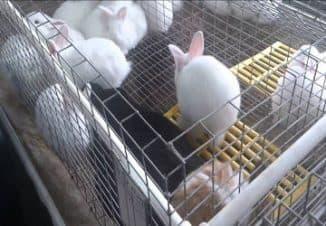 открыть бизнес кролики