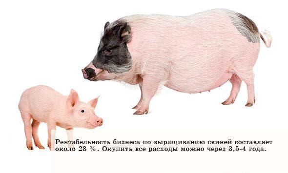 бизнес-план в России