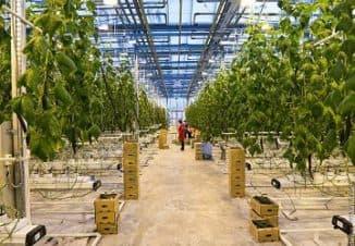бизнес план фермерское хохяйство