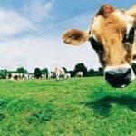 сельскохозяйственное предприятие